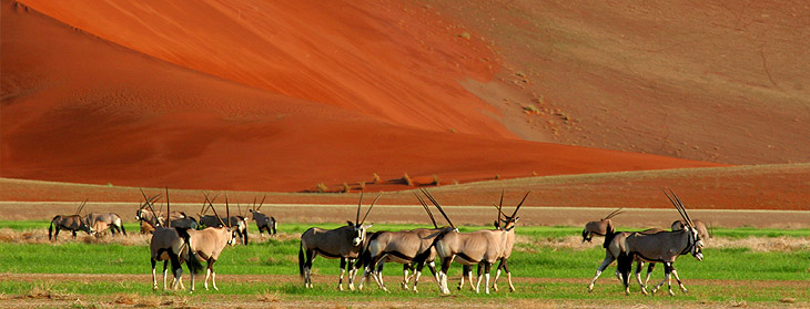 Best safaris in Africa 2018